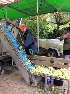 Æbler i lange baner blev presset i løbet af lørdagen.
