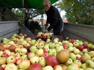 Æbler i lange baner blev presset i Assens.